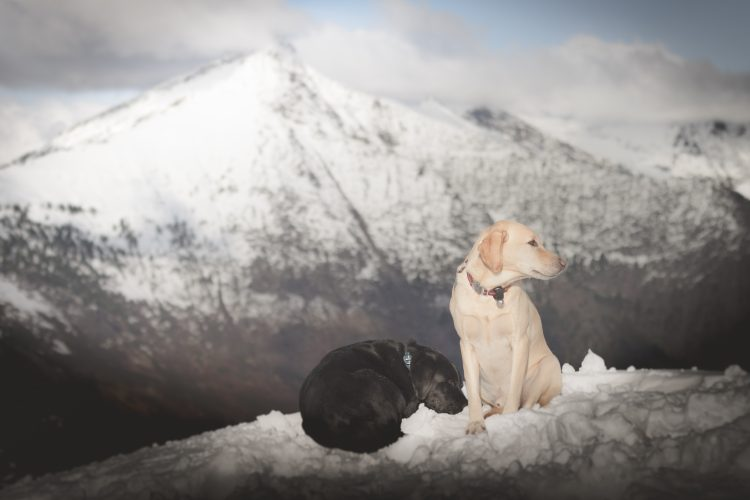 Poe Mountain with summit dogs