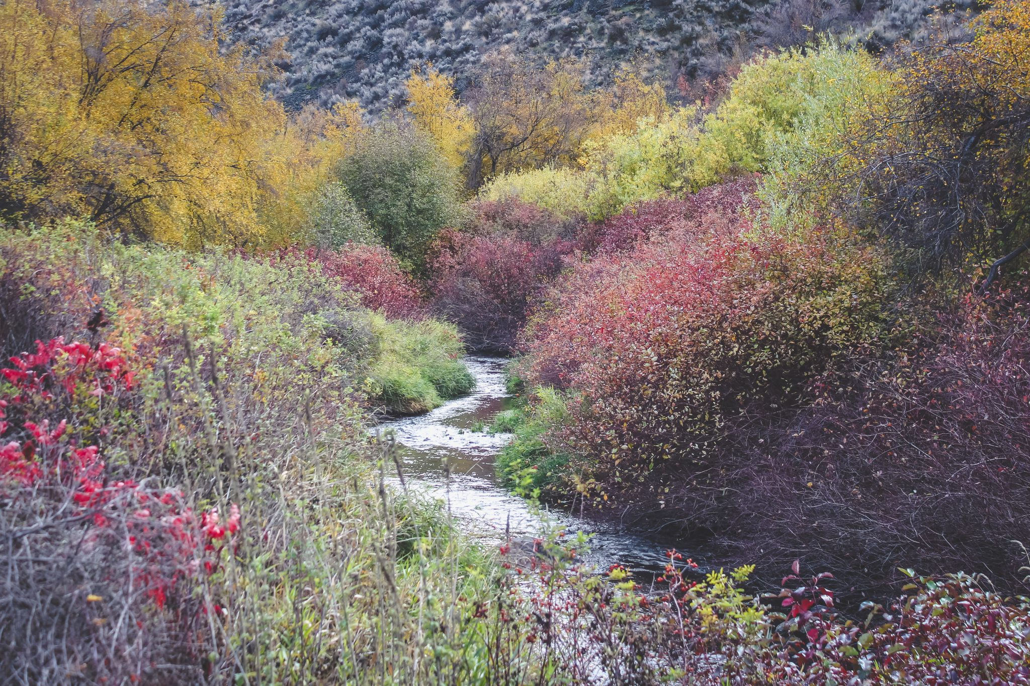 Cowiche Creek in color