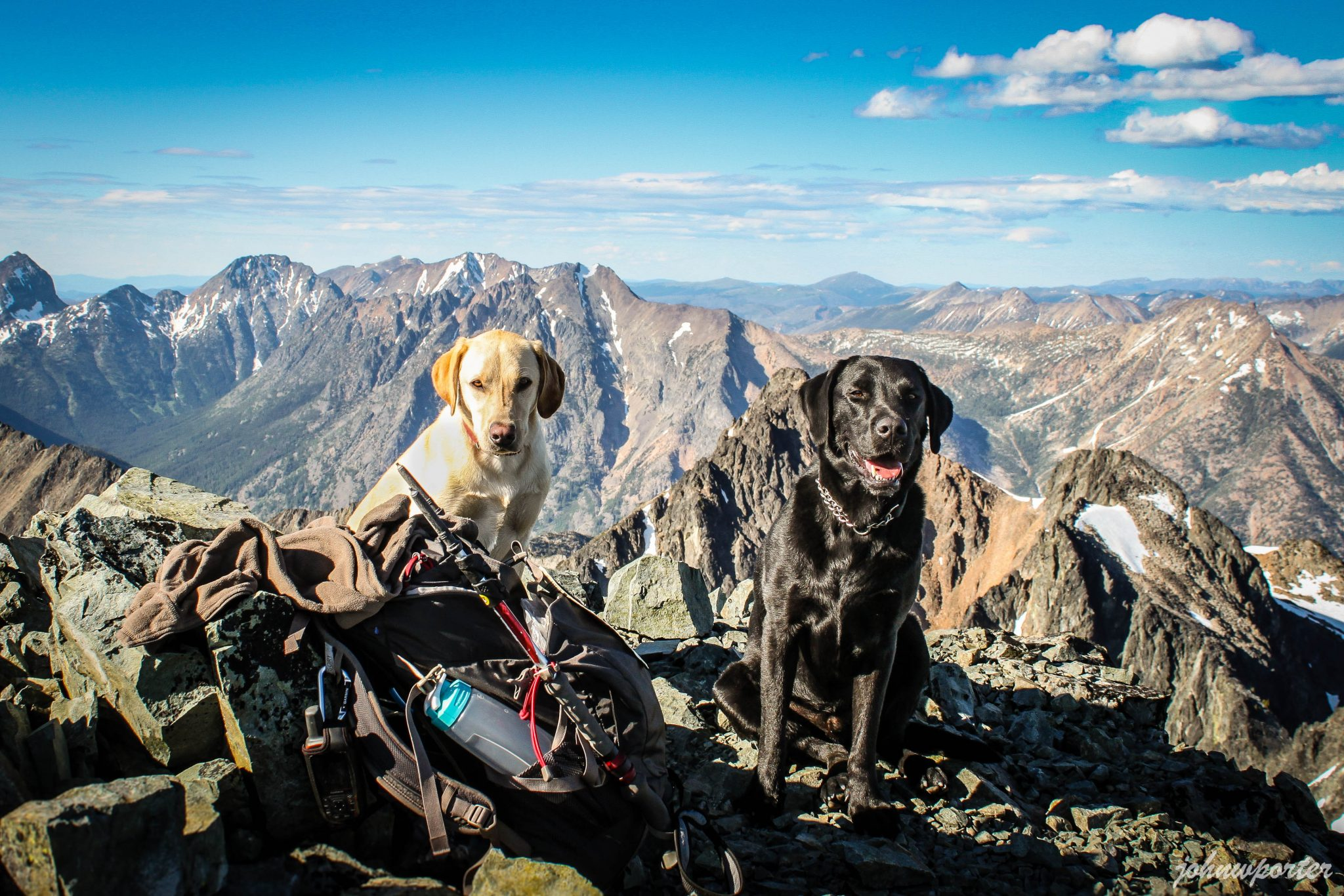 Summit dogs on Robinson Mountain