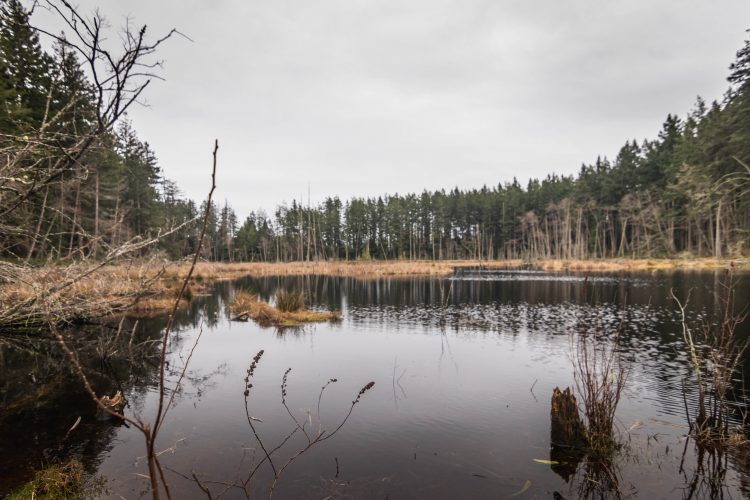 Cranberry Lake in Cama Beach Historical State Park