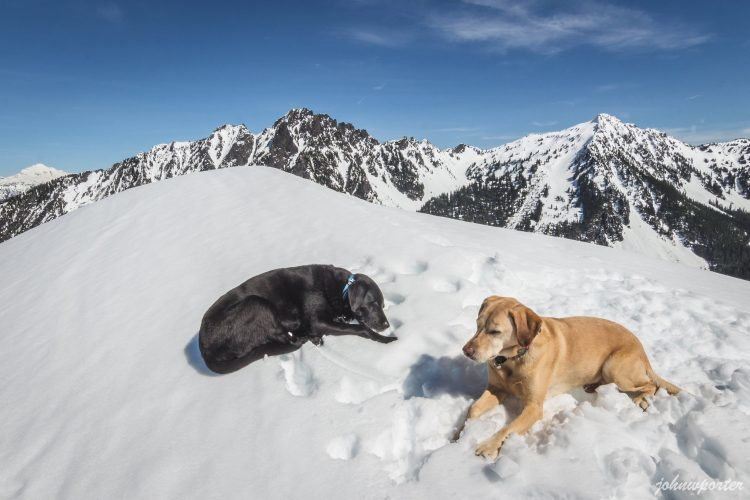 Summit dogs on Iron Mountain 5245