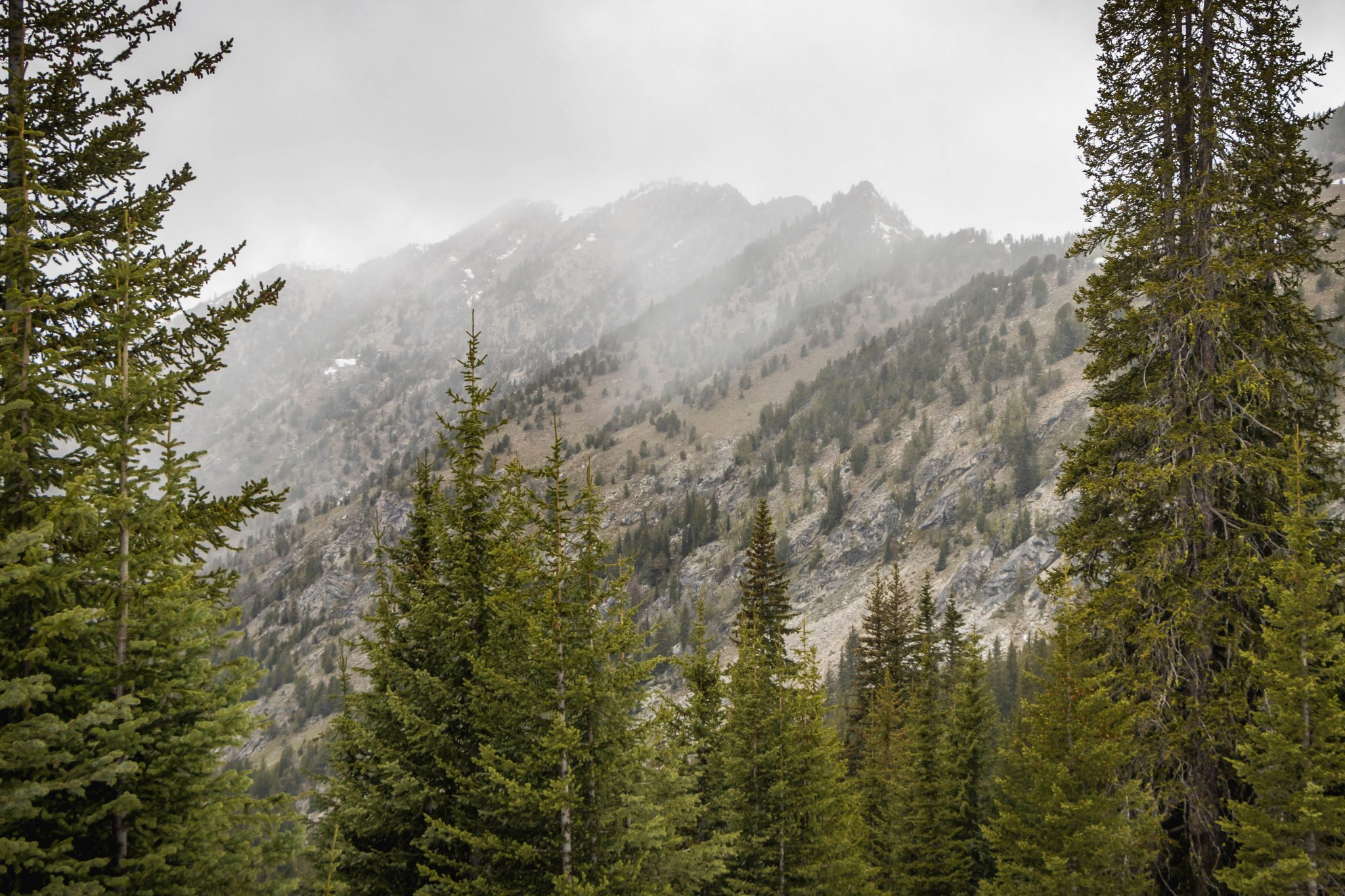 Old Maid Mountain in the mist