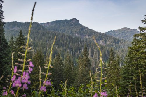 Read more about the article Mount Rudderham by Crosby Mountain via Lake Elizabeth / 羅德漢山