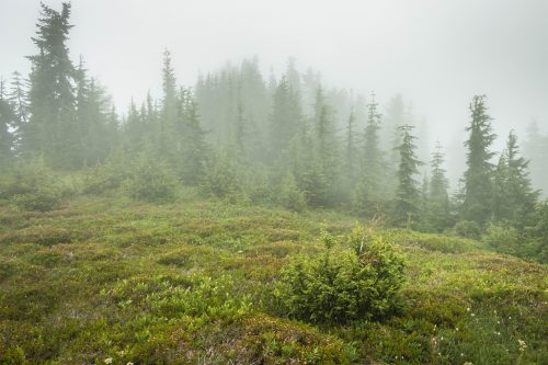 Read more about the article Meadow Mountain by Loser Ridge via Stirrup Lake + Meadow Pass / 草地山